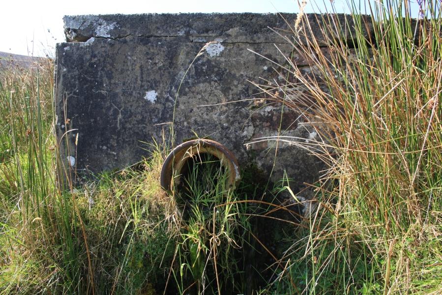 Ffynnon Cae Garw, Carnguwch