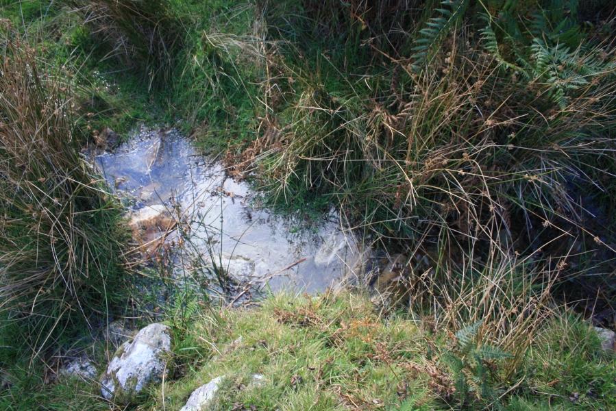 Ffynnon Sanctaidd, Carnguwch